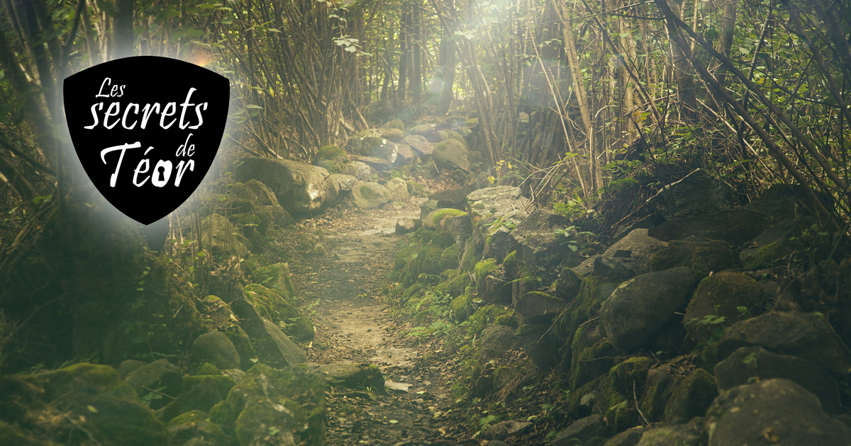Charte du druide - Les secrets de Téor - patrimoine La Bruffiere